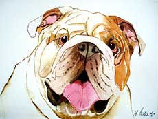 Portrait of bulldog.