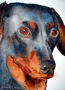 Portrait of dachshund.